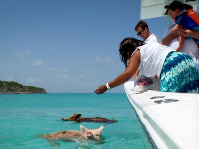 feed-swimming-pigs-in-exuma-the-bahamas