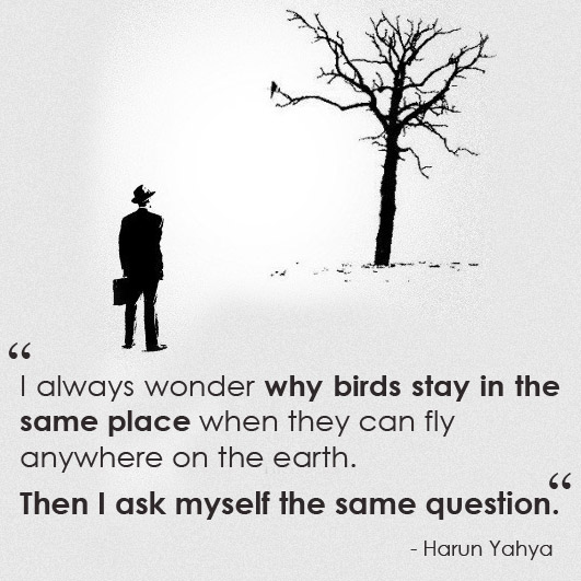 birds and us harun yahya