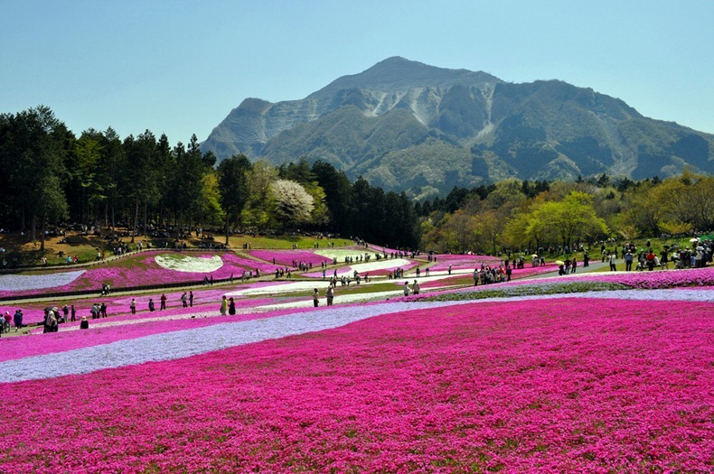 Japan_Hitachi_Seaside_Park