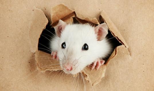"""You dirty RAT"" – Spy versus Spy in the cybercrime underworld"