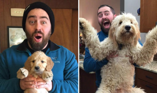 Your Daily Dose Of Cuteness: Adorable Then & Now Pictures Of Pups Growing Up
