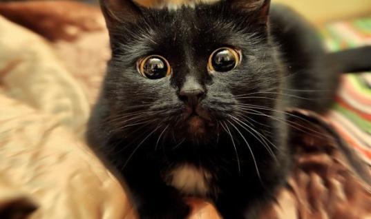 25 Overdramatic Cats Overdramatic Cats, Dramatic Cats, 25 Dramatic Cats, Hilarious Cats, 25 Hilarious Cats, 25 Funny Cats, Funny Cats, 25 Annoyed Cats, Annoyed Cats, Cats who deserve an oscar