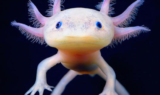 20 Animals You've Probably Never Seen