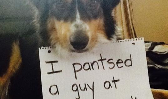 25 Bad Puppers Are Named And Shamed 25 Of The Best Dog Shaming Photos, 25 Dogs Who Are Feeling No Shame, 25 Puppers Who Are Shamed For Helping Their Owners, 25 Hilarious Shaming Signs For Dogs Who Did Bad Things, 25 Dogs Who Are Shamed By Their Owners, 25 Shameless Dogs Busted, 25 Dogs Shamed By Owners - Number 15 Is My Favorite, 25 Misbehaving Dogs Shamed By Their Owners, 25 Owners Who Shame Their Dogs Online, 25 Bad Doggos Are Named And Shamed, 25 Of The Best Named And Shamed Doggos