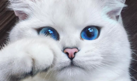 21 Gorgeous Cat Photos That Will Make Your Heart Swell 21 Of The Cutest Cat Photos Ever, 21 Adorable Cat Photos That The Internet Is Freaking Out Over, These Gorgeous Cat Photos Are Too Cute To Ignore, 21 Shockingly Cute Cat Photos That Will Melt Your Heart, 21 Photos Only Cat Lovers Will Obsess Over, Only Cat Lovers Will Freak Over These 21 Adorable Kitties, 21 Pretty Kitties That Will Make You Say Aww, The 21 Cutest Cats On The Internet, You'll Fall In Love With These 21 Unique Cat Breeds