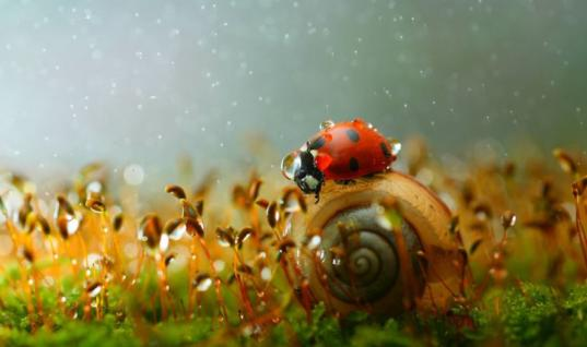 These 20+ Amazing Photos Reveal The Magical World Of Snails 25 Amazing Photos Of Snails Living Their Life, 25 Photos Of Snails That Will Make You Wish You Were One Of Them, 25 Amazing Snail Shots That Show Their World In A Different Light, 25 Beautiful Photos Of Snails In Their Natural Habitat, Like Snails? Neither Did We Until We Saw These 25 Amazing Photos, 20+ Majestic Photos That Show The Magical World Of Snails, Check Out These 25 Cool Photos That Show Why Snails Are The Coolest Members Of The Animal Kingdom, Do You Think Snails Are Dull? These 25 Awesome Snail Photos Will Change Your Mind, 25 Beautiful Photos That Show Us The Fascinating World Of Snails