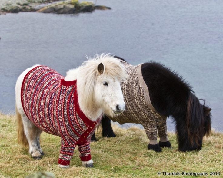 c08029413733d317eda41ddb89fccd6b-icelandic-sweaters-sweater-weather.jpg