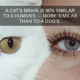 25 Cat Facts You Probably Didn't Know 25 Things Cat Do That You Don't Know About, 25 Things Cats strangely do, 25 Strange Things Cats do, 25  Amazing Facts About Cats, 25 Special Cats That Did Something, 25 Cats Who Did Something Amazing, 25 Fun Facts About Cats, 25 Cats that have made fun facts, 25 Cats Who Strangely did something to change human