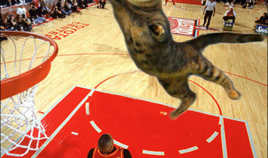 Cats And Sports Players Look Hilarious In Photoshopped Pictures These Cats And Sports Players Ask For A Lot Of Attention, Special Looking Cats And Sports Players Images, Crazy Images With Sports Players And Cats, Best-Looking Images With Cats And Sports Players, Hilarious Images Of Cats And Sports Players, Creative And Cool Cats And Sports Players Images, These Are The Best Images Of Cats And Sports Players, 25 Funny Images With Cats And Sports Players, Crazy Pics With Sports Players And Images