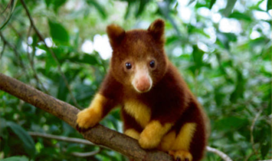 Extinction: These Amazingly Cute Animals Will Soon Be Gone Forever