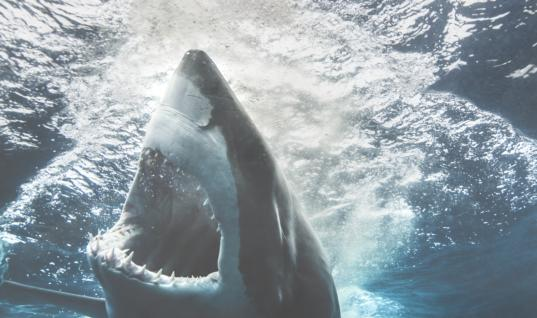 20 Of The Worst Shark Attacks Ever Recorded