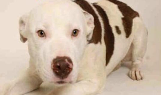 Heartbroken Dog Goes To The Shelter And Instantly Knows He's Being Surrendered