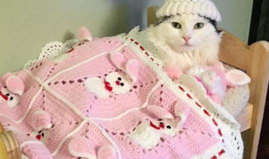 Cat Rescued From Terrible Conditions Now Sleeps In A Doll Bed Every Single Night