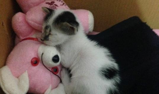 Tiny Kitten Won't Stop Meowing, But Then This Woman Sees Him