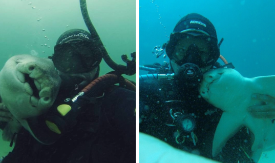 Diver Cuddles With Unlikely Friend Every Time He Goes Underwater