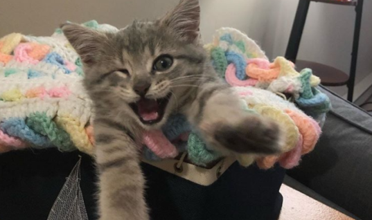 This One-Eyed Kitten Was Barely Alive When They Found Him, But Look At Him Now