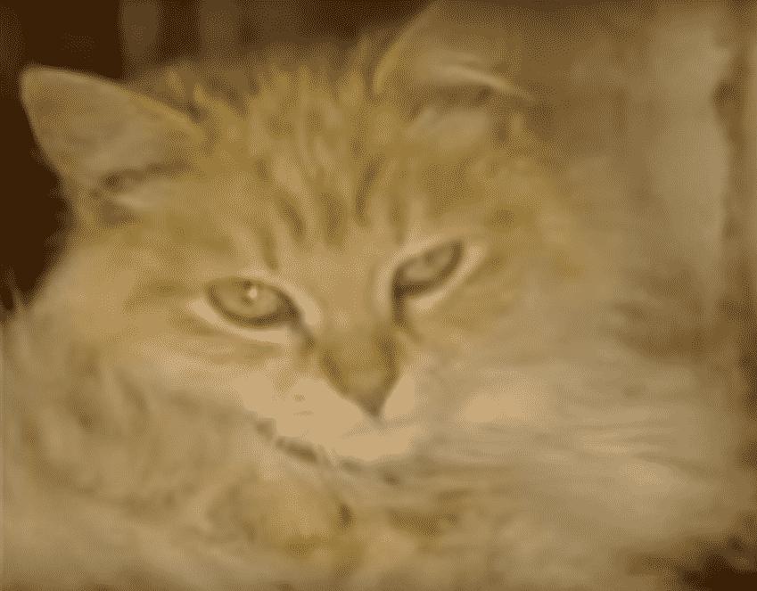 iams weight control cat food