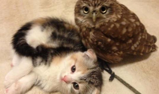 This Unlikely Friendship Between A Kitten And A Baby Owl Is Too Cute For Words
