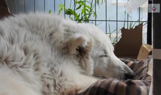 No One Expected This Old Stray Dog To Survive, Then This Happened
