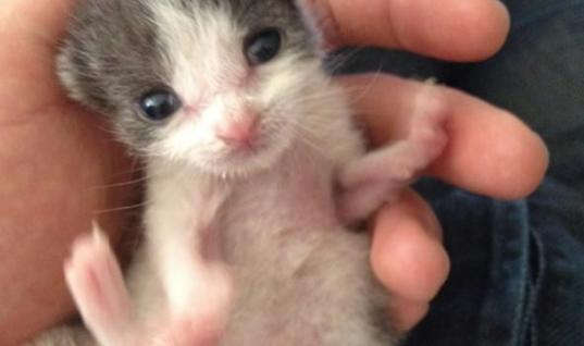 Man Saved An Orphaned Kitten And Raised Her – Look At Her Now