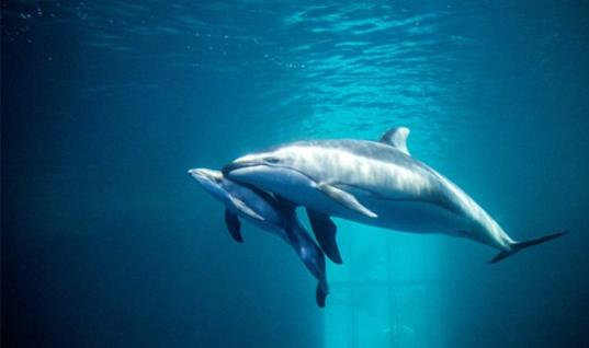This Rare Scene Of A Dolphin Giving Birth And Guiding Her Calf Has Melted Everyone's Hearts