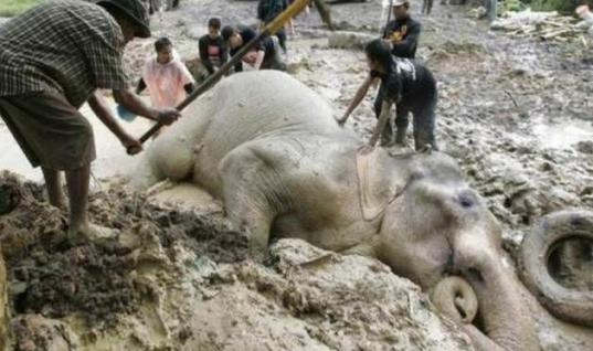 Defenseless Elephant Is Swept Away By Flooded River, Villagers Do Something Amazing To Save Him