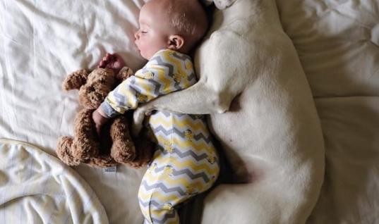 Rescued Dog And Baby Become Nap Buddies