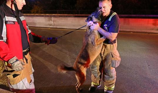 Heroic Firefighter Gets A Kiss After Rescuing A Dog From Flood Water