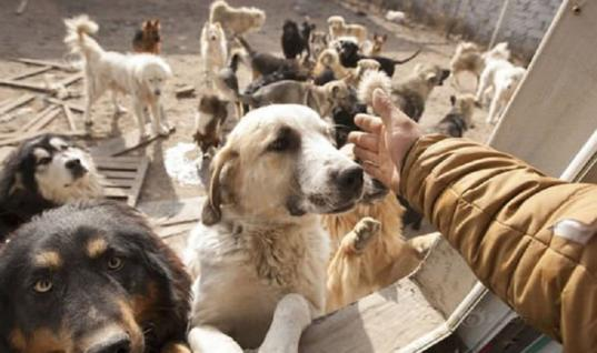 You Just Wouldn't Believe How Many Dogs This Man Rescued