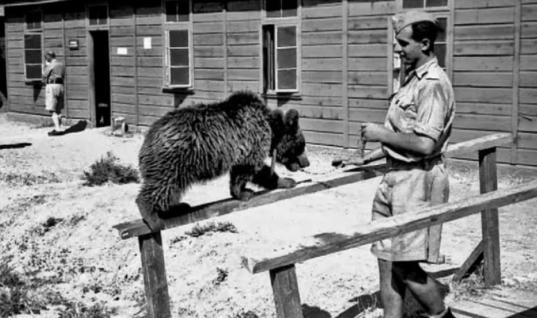 These Soldiers Adopted An Orphaned Bear Cub, Unbelievably He Turns Into A World War II Legend