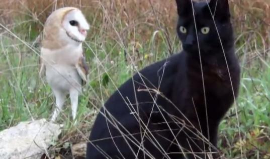 Zoologists Baffled By This Unlikely Friendship Between A Cat And An Owl