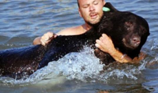 Brave Man Dives In The Gulf Of Mexico To Save A Drowning Black Bear