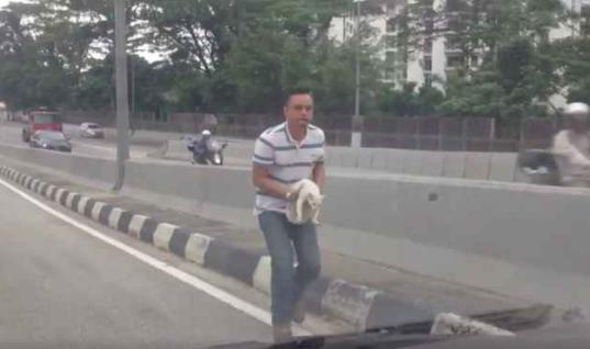 Man Sees Stray Cat Cowering In The Middle Of The Highway, Then This Happens