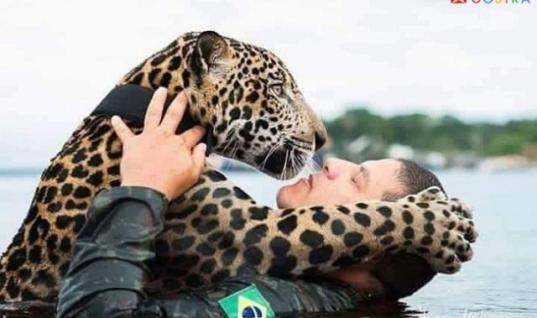 This Heart Wrenching Story Of An Injured Baby Jaguar Has A Surprising Ending