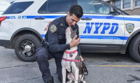 Cop Found Injured Pup Chained In A Building, He Sees The Look In Her Eyes And Adopts Her