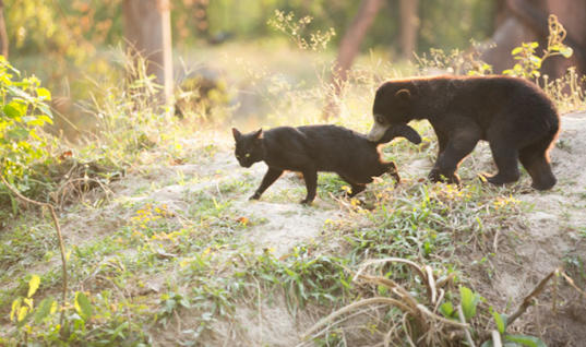 Adorable Bear Cub Is Best Friends With A Feline