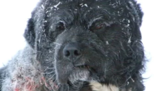 Dog's Happy Ending After Being Chained To A Tree For 4 Long Years