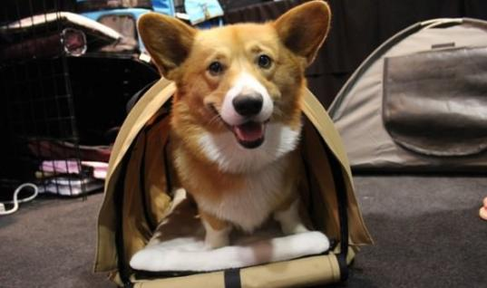 A Corgi Comforted A Grieving Man At The Airport In The Sweetest Way