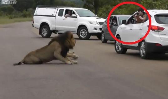 They Wanted To Take A Photo Of A Lion, But Then The Beast Moved