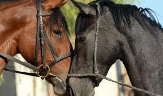 Horse Is Reunited With His Friends After Being Separated For 4 Years