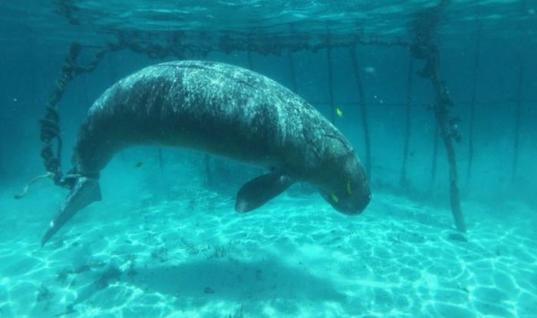 Rare Marine Mammals Were Being Held In Cages, Then This Happened