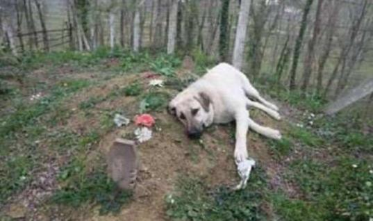 A Stranger Noticed A Dog Alone At A Grave – And Soon Solved A Town Mystery