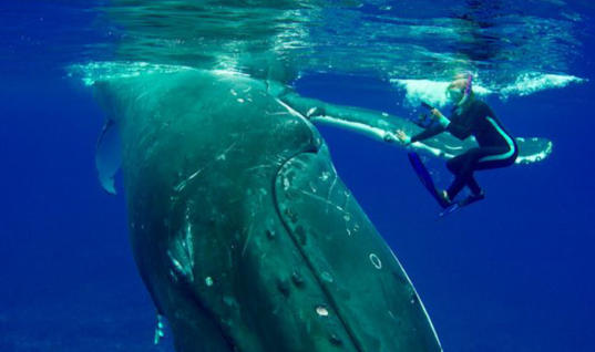 Diver Spends Hours Freeing A Whale From A Net, Her Response Will Shock You