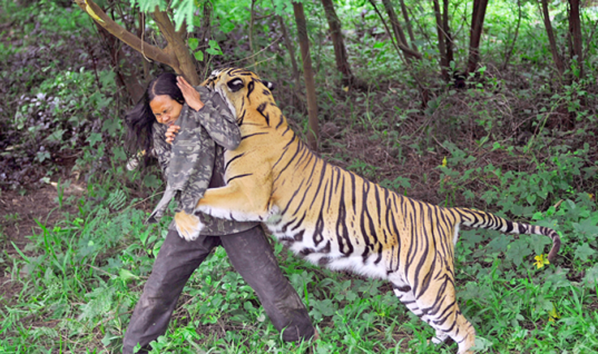 Man Uses This Insane Trick To Instantly Befriend A Tiger Who Attacked Him