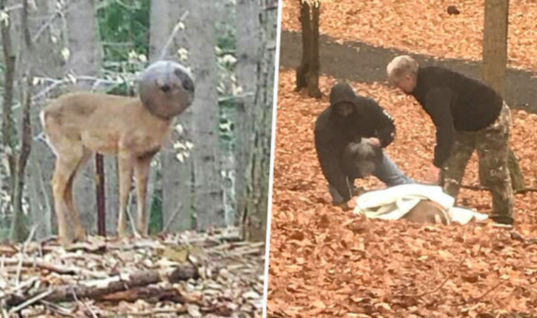 This Deer Approaches A Man In His Backyard And Is In Need Of Urgent Help