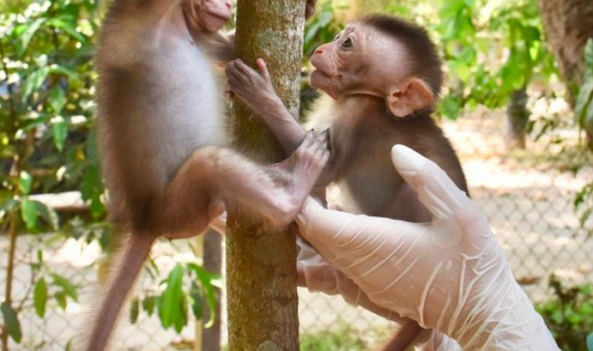 You Will Love How These Monkeys React When They Meet Each Other