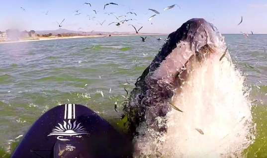 Flute-Playing Paddleboarder Shocked When Huge Whale Approaches Her