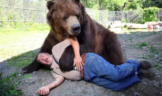 Huge Kodiak Bear Still Loves To Hug His Adoptive Dad