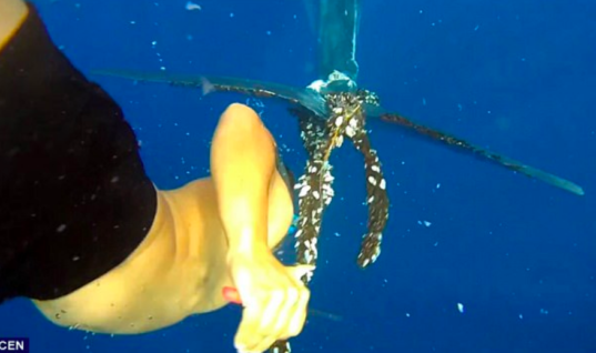 Whale Lets Diver Untangle A Fishing Rope Wrapped Around Its Body