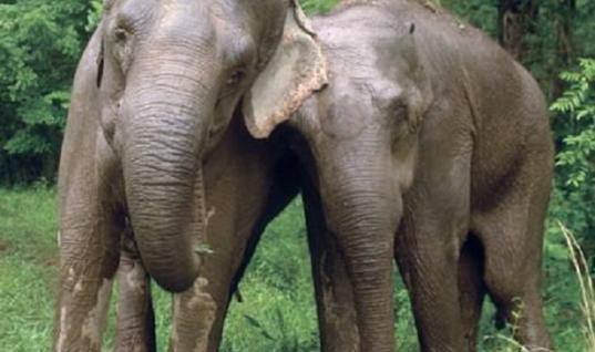 Extremely Emotional Circus Elephants Reunite After 20 Years